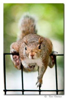 Pardon me, but do you have any more nuts?