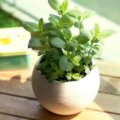 Sage. Including growing indoor, make sure that it is in an aerated location because it can get mildew. Another great thing about this is that you only need a little bit of sage to get good flavor.