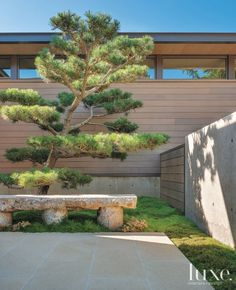Japanese black pines—their branches and even roots trimmed and sculpted over several years—dot the home's exterior. Clerestory windows help to balance the bounty of light coming through the great room's glass wall.