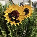 Sunflower And Bee Sculpture - Simply beautiful handpainted sunflower sculpture with bumblebee detail perfect for your garden borders. Paper Mache Sculpture, Garden Sculpture, Paint Recycling, Bumble Bee Decorations, Sunflower Garden, Tin Can Art, Garden Borders, London Garden, Bee Art