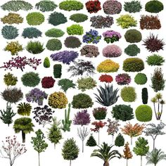 Photoshop PSD Landscape Tree 9 – CAD Design | Free CAD Blocks,Drawings,Details