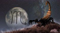 30 true facts about the scorpion personality Scorpio Symbol, Scorpio Traits, Scorpio Zodiac, Astrology Zodiac, Astrology Signs, Zodiac Signs, Scorpio Art, Scorpio Quotes, Scorpio Images