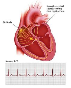 human heart electromagnetic field human heart electromagnetic field