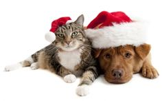 christmas animals pictures   Trots serveren 1963 Christmas wallpapers