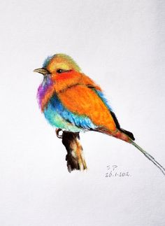 Exotic bird 2  Original Colored Pencil drawing by PrismaticColours, $45.00