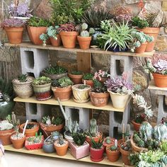 #Goals #Garden #Serene
