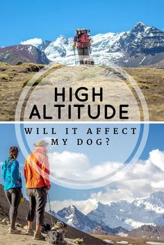 Dogs can be affected by high altitude, so take care with hiking with dogs in high elevation. Follow our tips for avoiding altitude sickness with your dog. | Long Haul Trekkers