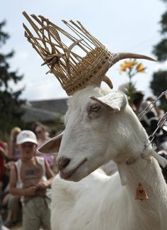 "Grazyolyte, the ""most beautiful goat in Ramygala"", Lithuania."