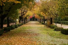 Golden days - Curia, Portugal