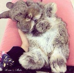 adorable cozy bun