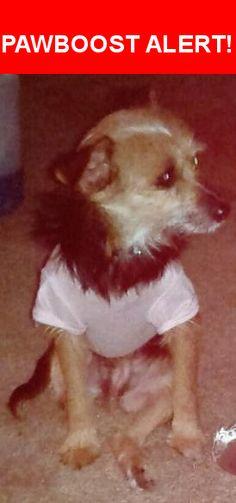 Please spread the word! Bailey was last seen in New Port Richey, FL 34653.    Nearest Address: Near Trichel lane and congress st new port richey fl
