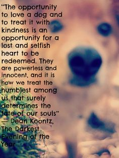 This is my dog I rescued 3 year ago, Hurley, and a quote from a book I finished today.