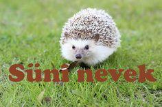 Süni nevek - Állatnevek Fifa, Animals, Animales, Animaux, Animal, Animais