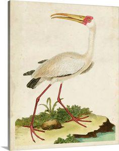 Canvas Wall Art, Wall Art Prints, Fine Art Prints, Framed Prints, Canvas Prints, Vintage Bird Illustration, Palm Tree Silhouette, Bird Pictures, Vintage Birds