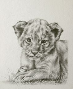 Cute lion cub - animal-cubs Fan Art