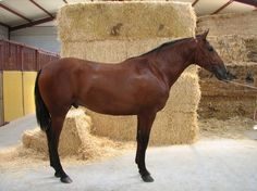 potro pre ,línea Educado x en venta en Castilla y León :: HE4469A3A Noblesse, Spanish, Horses, Animals, Horses For Sale, Horse Photography, Thoroughbred, Equestrian, Fotografia