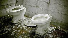 Toilet, Bathroom, Outdoor Decor, Google, Home Decor, Washroom, Flush Toilet, Decoration Home, Room Decor
