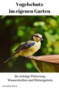 """Jedes Jahr Anfang Jänner gibt es die """"Stunde der Wintervögel"""". Da drücken sich Tausende Menschen  ihre Nasen an der kalten Fensterscheibe platt, um die Vögel an ihrem Futterhäuschen zu zählen.    Die Winterfütterung allein reicht aber oft nicht aus, um den Bestand der Wildvögel zu erhalten - naturnahe Gärten oder Parks mit einem reichhaltigen Angebot an Nahrung und genügend Raum für Niststätten sind hier ein guter Ansatzpunkt."""