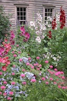 Cottage Gardens Cottage Garden home flowers garden bloom hollyhocks - Garden Shrubs, Garden Landscaping, Landscaping Ideas, Garden Cottage, Home And Garden, Garden Tips, Cozy Cottage, Beautiful Gardens, Beautiful Flowers