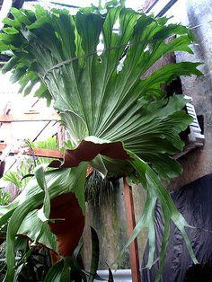 Planta do Sr. Durval Nunes