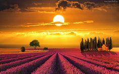 Toskania, Włochy, Zachód Słońca, Lawendowe Pole, Dom