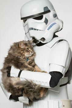 Even a storm trooper deserves a little kitty love.