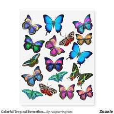 Original fine art design of colorful tropical butterflies by artist Carolyn McFann of Two Purring Cats Studio printed on quality temporary tattoos for butterfly fans of all ages. Colorful Butterfly Tattoo, Butterfly Tattoos For Women, Butterfly Wallpaper, Blue Butterfly, Tattoo Papillon, Continuous Line Tattoo, Cute Small Tattoos, Awesome Tattoos, Unique Tattoos