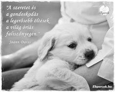 Kutyás idézetek – KutyaSzeretet.hu Dog Quotes, Beagle, Labrador Retriever, Thoughts, Humor, Dogs, Life, Animals, Animal Pictures