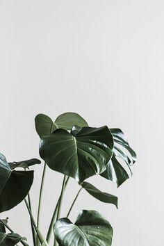 50 Ideas Flowers Tropical Illustration Plants For 2019 Plant Wallpaper, Tropical Wallpaper, Wallpaper Backgrounds, Iphone Wallpapers, Grand Cactus, Cactus Plante, Estilo Tropical, Photo Deco, Plant Aesthetic