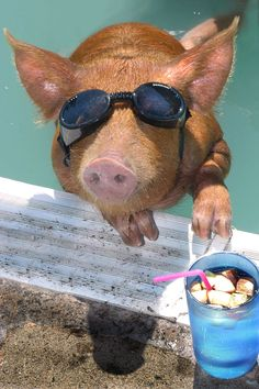 20 Animals That Are Totally Ready For Summer @Megan Ward Ward Weatherly