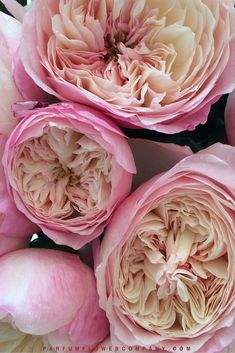 The David Austin Wedding Rose Constance™ is a wonderfully romantic rose, with an overall effect of soft pink and with a delicious fruity fragrance. Exotic Flowers, Pretty Flowers, Purple Flowers, Yellow Roses, Pink Roses, Daffodil Flower, Cactus Flower, Parfum Flower, David Austin Rosen