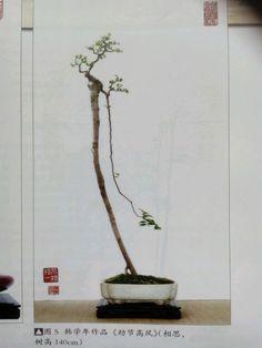 638 Best Bonsai Literati Images In 2019 Bonsai Trees
