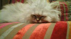 Ons klein  kat