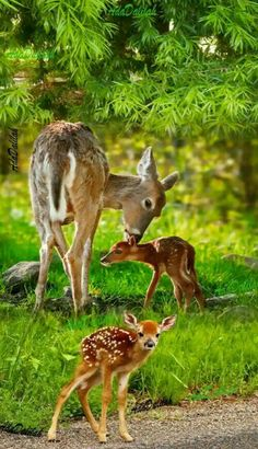 💕💕💕💕💕 - Dogs etc - Animales Forest Animals, Nature Animals, Animals And Pets, Beautiful Creatures, Animals Beautiful, Cute Baby Animals, Funny Animals, Tier Fotos, Woodland Creatures