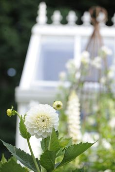 White Aster | pinned by Western Sage and KB Honey (aka Kidd Bros)