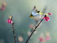 #723 小綠穿曉 | Flickr - Photo Sharing!