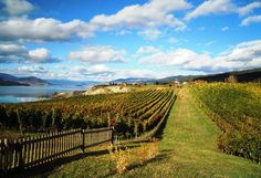 10 Must-try Wines From the Naramata Spring Release http://www.bcliving.ca/food-drink/10-must-try-naramata-wines