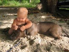 Safest child in the world. I love pit bulls!