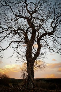 Another one of my favorite trees.  Shot in Freeland, MD.