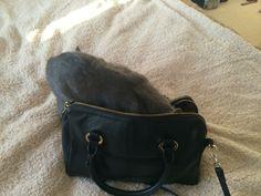 """Kitten-Ashie - """"let's go shopping"""""""