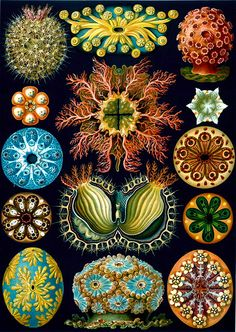 microscopic creatures:DIATOMS are single celled photosynthetic algae that are abundant in Earth's lakes and oceans ~ they exist in a myriad of shapes ~ patterns ~ colors