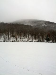 A misty, snowy morning in the Adirondacks. View of Little Cathead Mountain from Lapland Lake Nordic Vacation Center