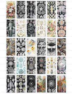 Free new age Collage Sheets for Pendants | Collage Sheet 1x2 Sea Life Plants Animals Flowers Seashells II Domino ...
