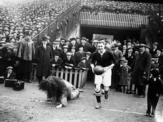 Millwall Football Club captain, Len Graham, fails to conceal his amusement as he leads his team out at the Den and the mascot, a man dressed as a lion, falls over. (Photo by H F Davis/Getty Images) Football Stadiums, Sport Football, Soccer, Millwall Fc, Sports Advertising, London History, South London, Good Jokes, London Photos