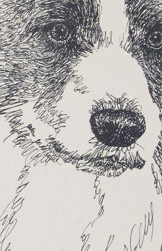 Border Collie pencil sketch