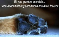I just want mine to live as long as me so we could cross the rainbow bridge together!
