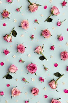 Floral Wallpaper Phone, Phone Screen Wallpaper, Rose Wallpaper, Wallpaper Iphone Cute, Cellphone Wallpaper, Colorful Wallpaper, Trendy Wallpaper, Rose Background, Flower Background Wallpaper