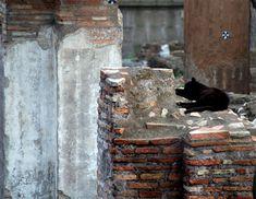 Torre Argentina - Roman Cat Sanctuary in Rome, Italy