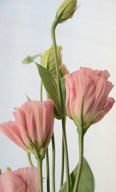 wasbella102:    Unfurling by Catherine Andrako