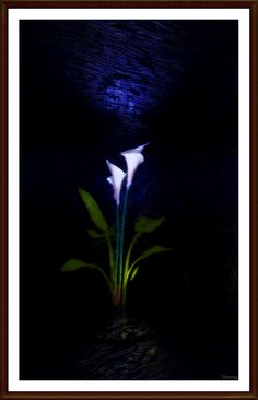 https://flic.kr/p/vXxsUb | calla in the moonlight | Created with Bryce, postwork…